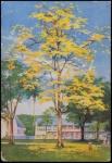 Cartão Postal impresso na Escócia por Robert MacLehose & Co., Ltd, medindo 14 x 10 cm.