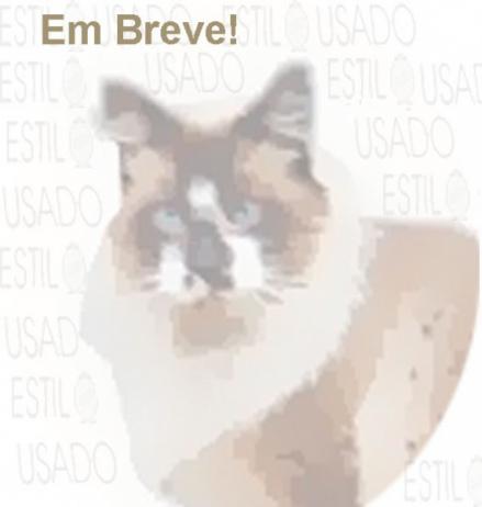 LEILÃO  ESTILOUSADO  LAPA- RIO DE JANEIRO- ABRIL 2019.