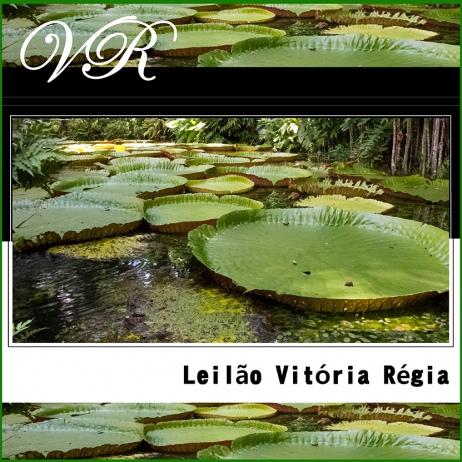LEILÃO INAUGURAL VITÓRIA RÉGIA - RESIDENCIAL - IMPERDÍVEL!!! 99% EM LANCE LIVRE!!!